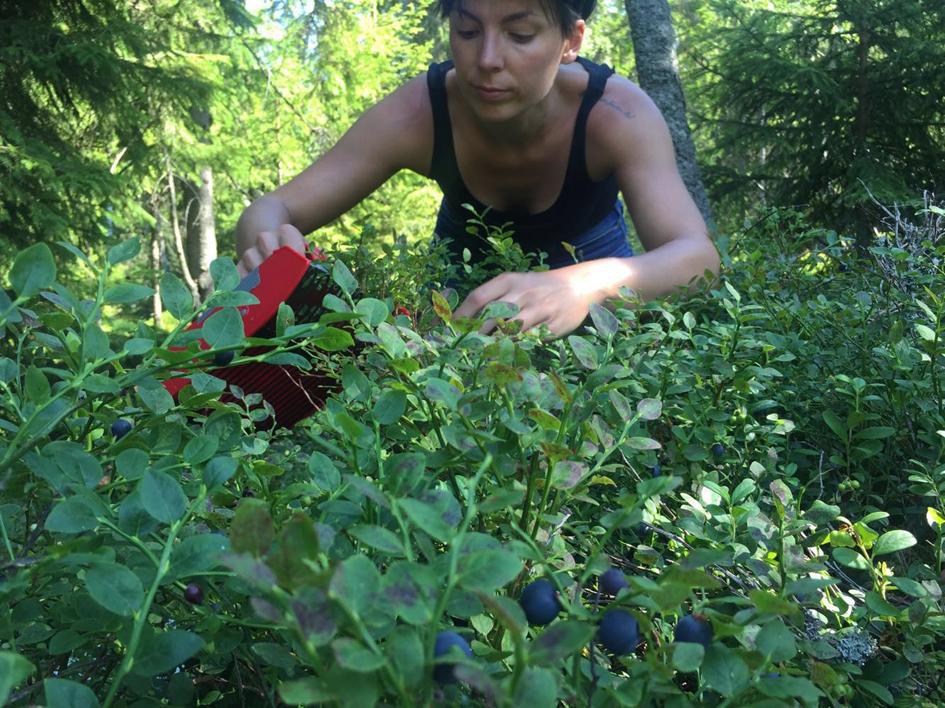 marjat, metsä, luonto, terveys, mustikka, kesä, vitamiinit, polyfenolit, antosyaanit
