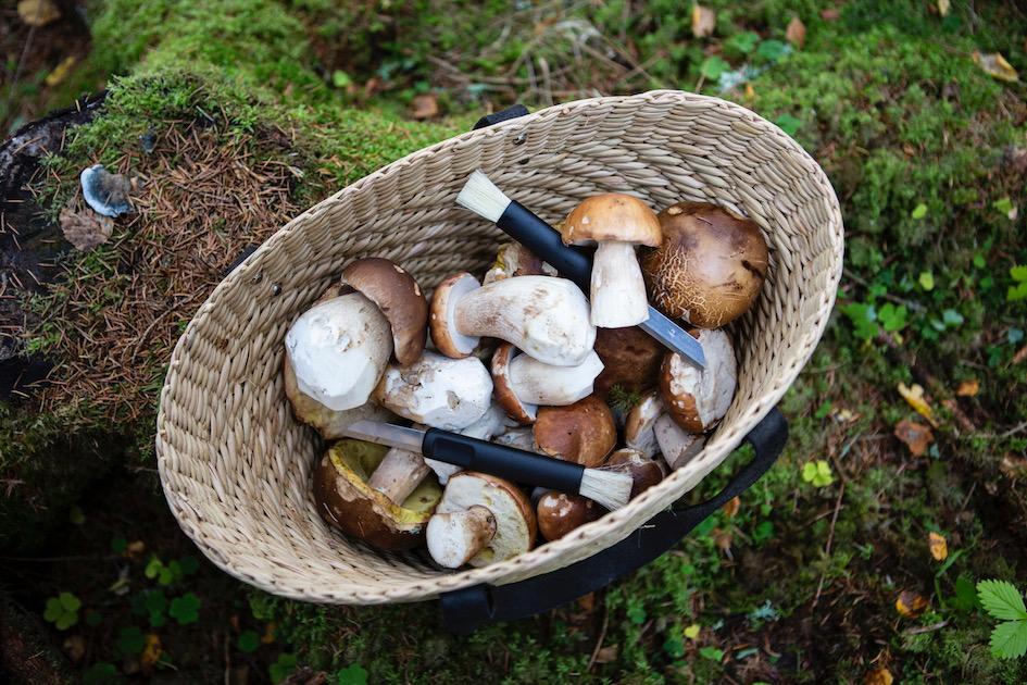 tatti, herkkutatti, sienet, sienimetsä, villiruoka, ruoka, reseptit, luonto, syksy