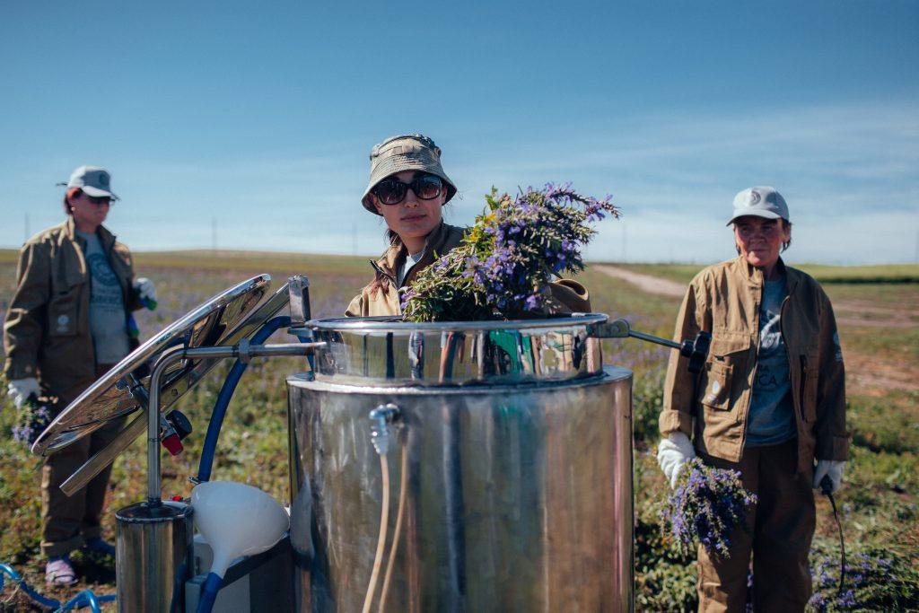 Natura Siberica, luonnonkosmetiikka, wild harvest,