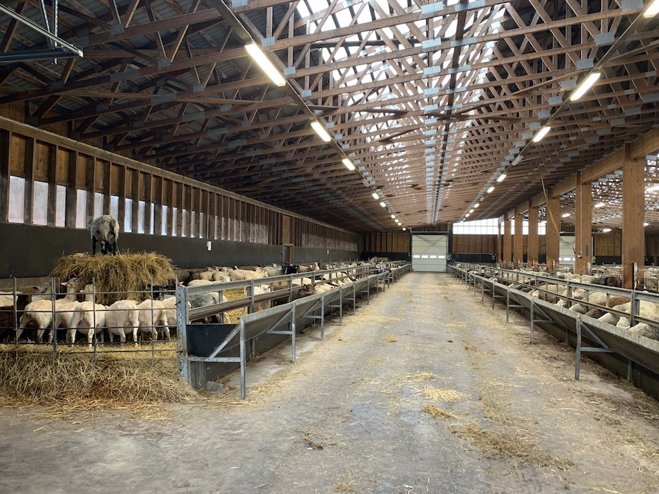 Myssyfarmi, Myssy, villa, villalanka, luomuvilla, kotimainen villa, Rintalan tila, lammas,